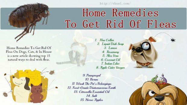 Get Rid Of Dog Fleas Home Remedy
