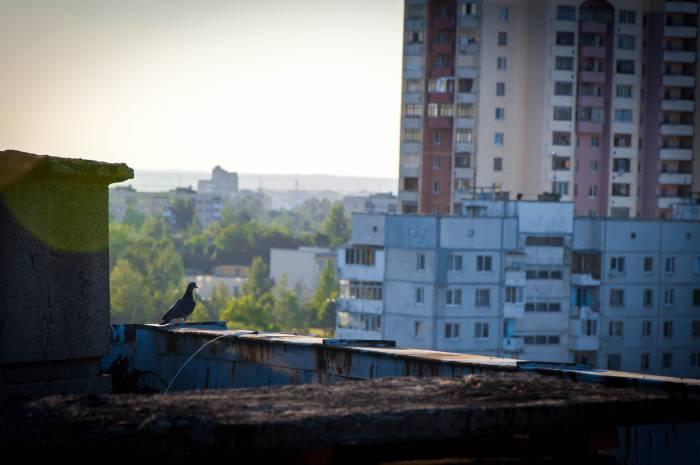 Птицы - извечные обитатели городских крыш. Фото Анастасии Вереск