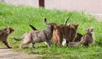 коты, бездомные животные