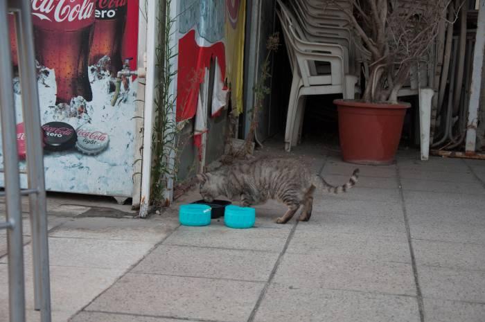 Для кошек у магазинчиков всегда приготовлена вода и еда. Фото Анастасии Вереск