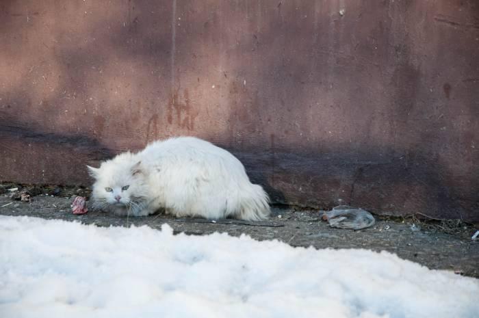 Домашние кошки плохо приспособлены к уличным условиям. Фото Анастасии Вереск