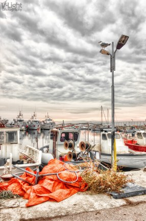 A seagull awaiting the storm   2011