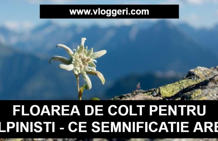 floarea de colt pentru alpinisti