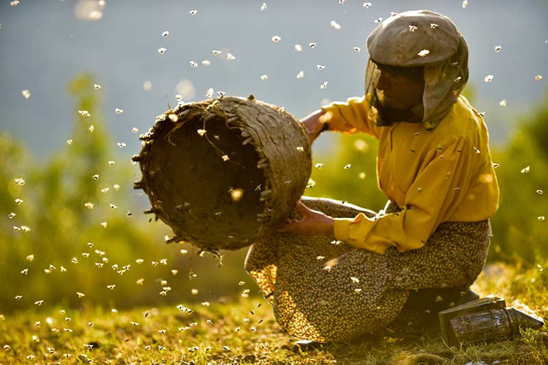 Honeyland – Медена Земја