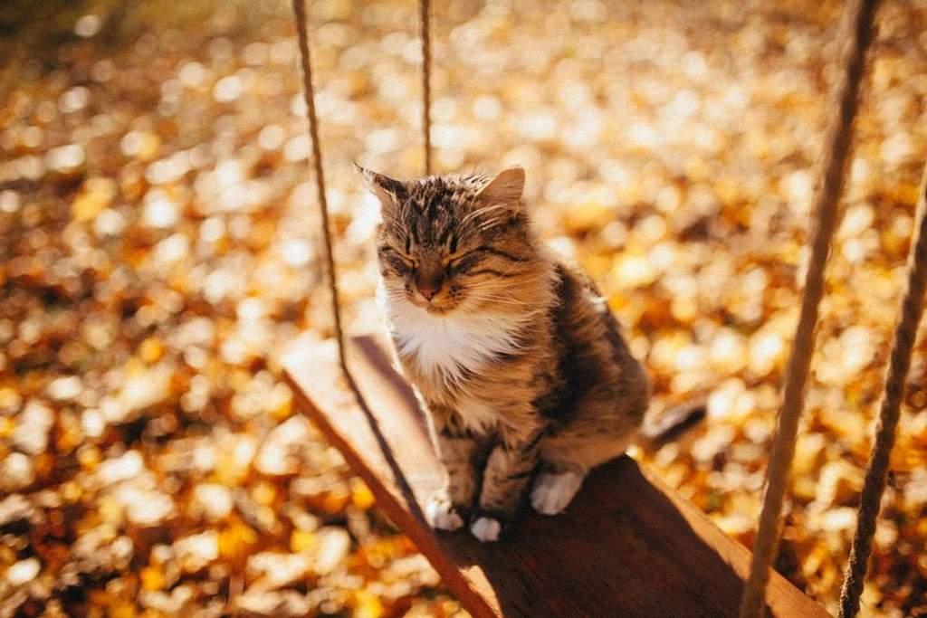 В Саратовской области ожидаются теплые выходные - теплая погода осень