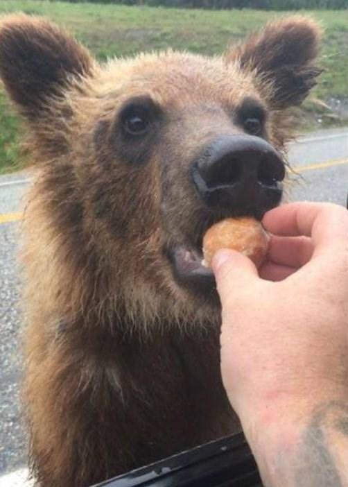 timbit treat for bear