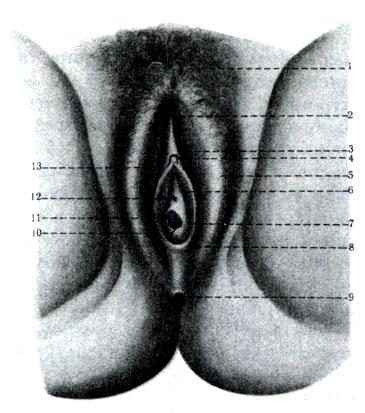 Veľký mäkký penis obrázky