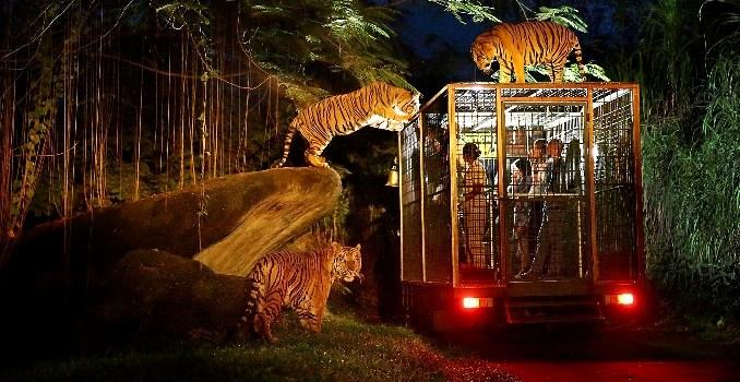 Vườn Thú Singapore Night Safari