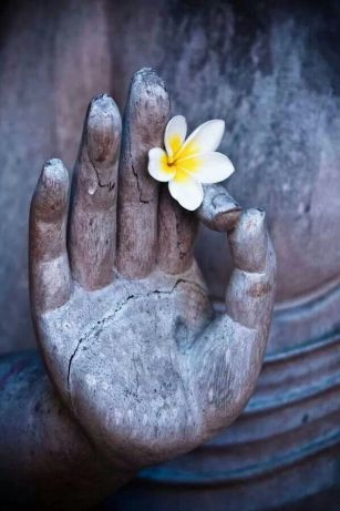 Buddha hand with flower