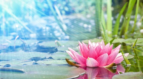 light and lotus