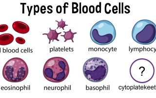 drawings of 8 different types of blood cells including a questionmark on cytoplatekeetlets