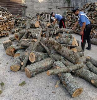 Tentato furto di legna - arresti CC Mistretta (5)