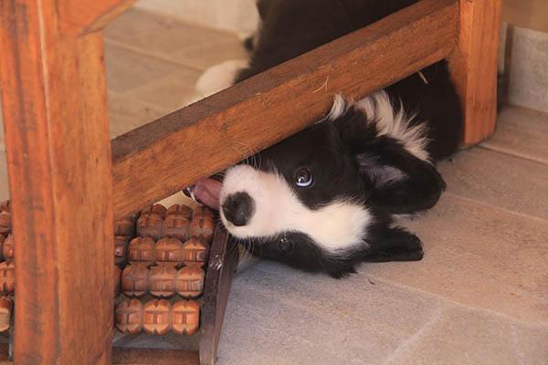 cachorros-e-decoracao-04