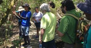 Los recorridos guiados están a cargo de jóvenes pertenecientes a la Iniciativa de Ecodesarrollo de Bahía de Jobos (IDEBAJO). (Voces del Sur)