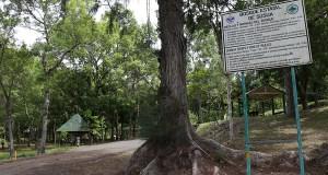 Bosque Estatal Susúa en Sabana Grande. (Voces del Sur)
