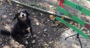 El Santuario de Animales San Francisco de Asís de Cabo Rojo no practica la eutanasia, y se dedica no solo a brindarles hogar y comida a los animales, sino a procurar su máximo bienestar y promover su adopción. (Twitter / SASFAPR)