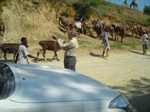 Haitian Vodou Voodoo Animal Sacrifices