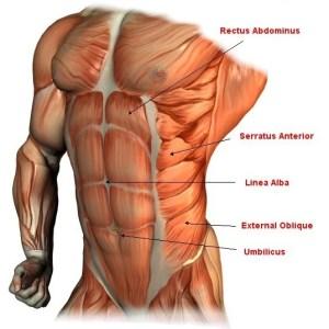 sixpack anatomie