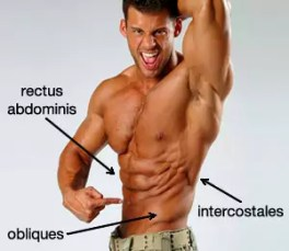 dumbbell side bend voor obliques