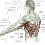 Straight Arm Pulldown uitvoering en techniek