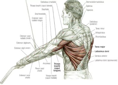 straight arm pulldown techniek