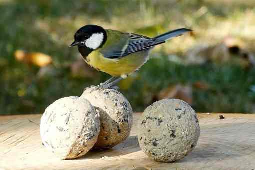 Jaarrond vogelvoer: voer de vogels het hele jaar