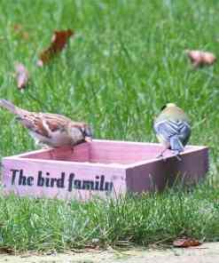 Vogelvriendelijke tuin maken, hoe doe je dat?