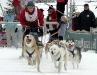 Internationales Schlittenhunderennen in Hammerbrücke im Vogtland