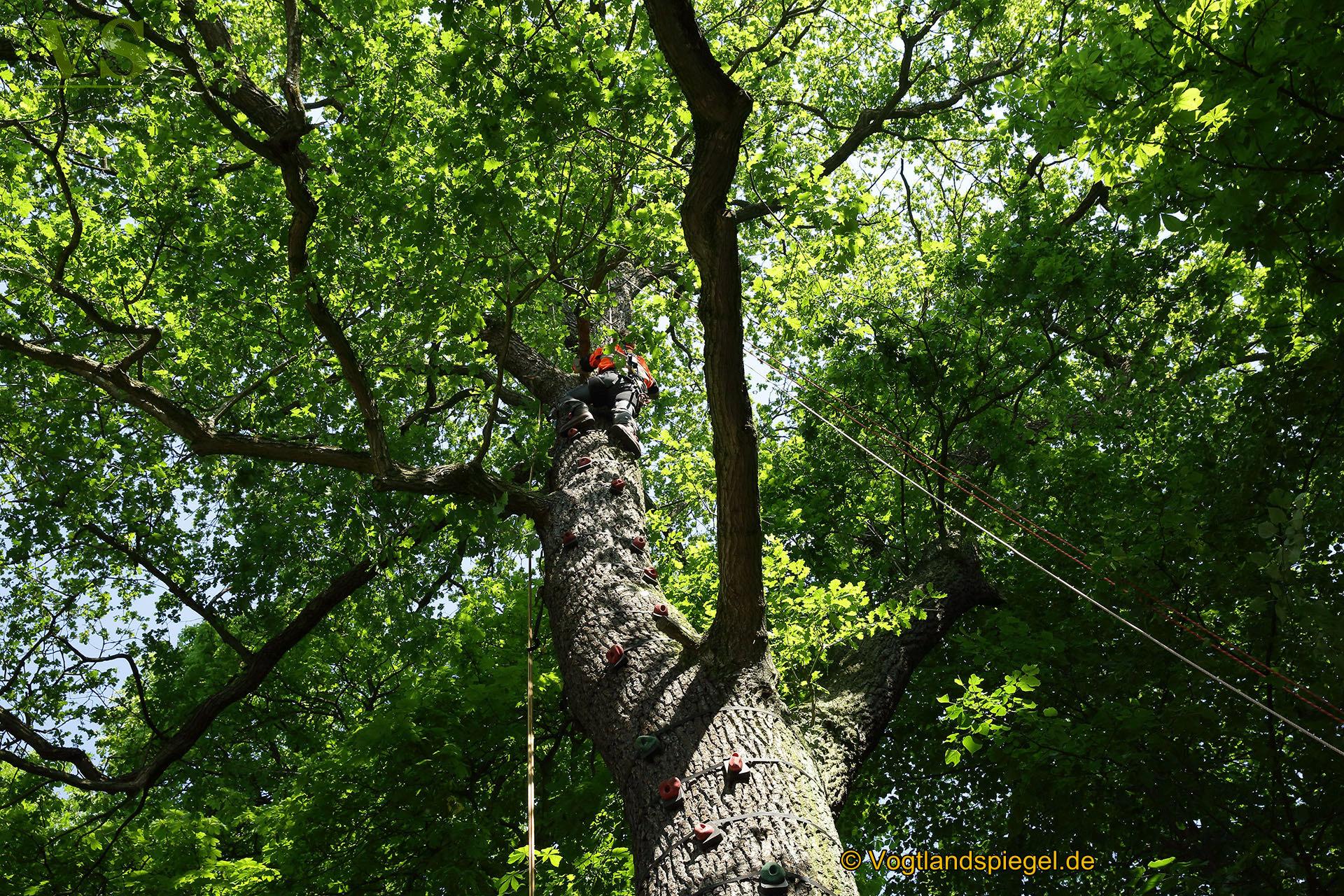 Fest des Waldes und der Jagd bei strahlender Sonne