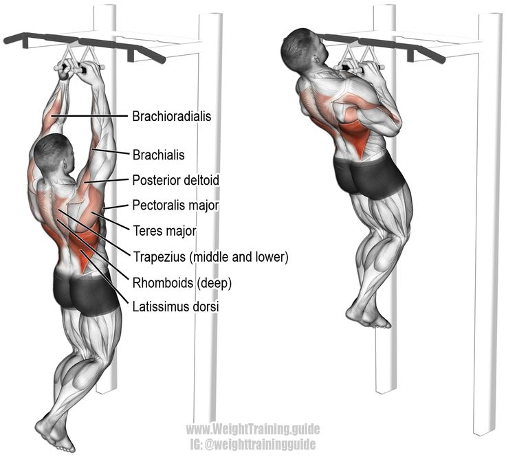 pull up muscles worked diagram fisher plow wiring ups new era of fitness motivation close neutral grip a squat out in back anatomy