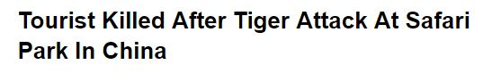 Headline read Tourist Killed After Tiger Attack at Safari in China