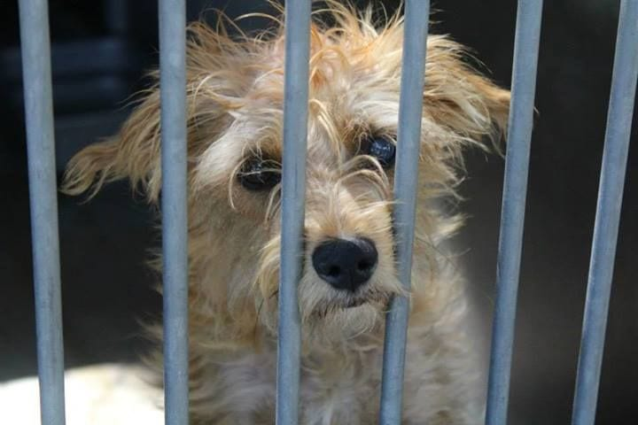 A dog that at one point was in the Orange County Animal Shelter. (Photo credit unknown)