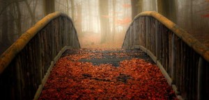 Welcome Autumn001