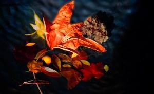 Autumn Kay Lynn Gabaldon