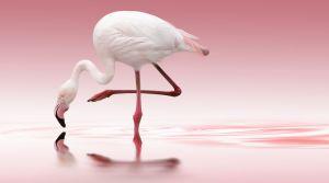 Flamingo By: Doris Reindl