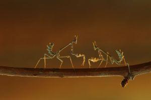 Predator Mantis By: Parpali0800