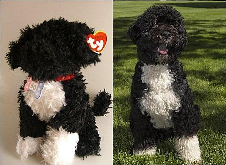 Bo's fuzzy avatar, left, now on sale at the Clinton museum, of all places; and the real thing, right, in his official White House portrait. (Amy Argetsinger/The Washington Post; Chuck Kennedy/The White House)