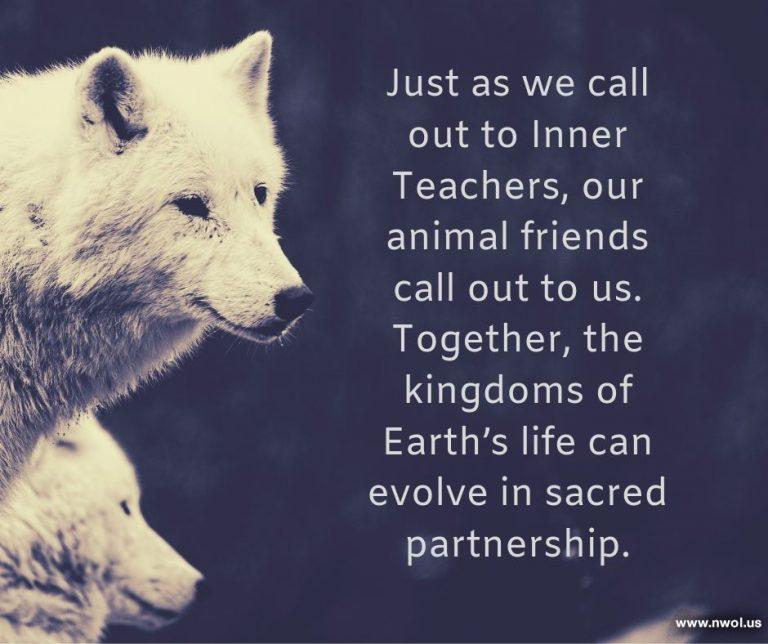 g-Animal-friends-call-to-us-sacred-partnership-1-249-F-768x644