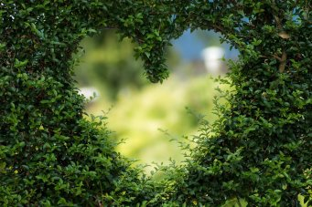 Responding with love: image of heart in leaves