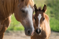 Mares Eat Oats – Practice Linking with the Audio File