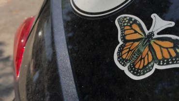 """A car windshield has a butterfly sticker next to a sticker saying """"wag more."""""""