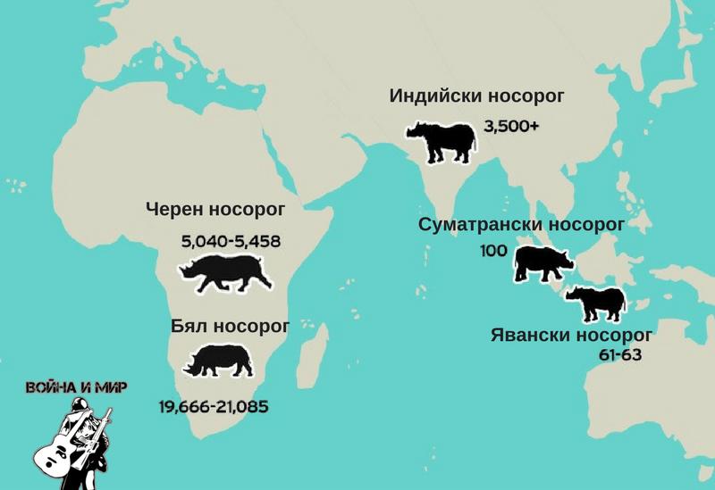 rhinoes_map.png