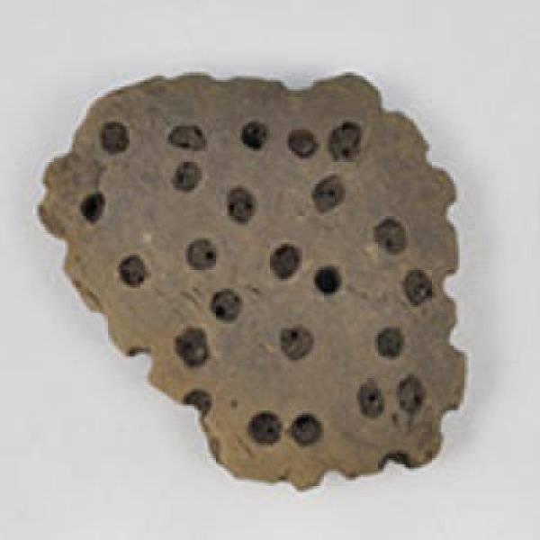 Ситов фрагмент от глинената яма в северна централна Полша, който беше подложен на анализи на остатъчните количества липиди. Снимка: Mélanie Salque