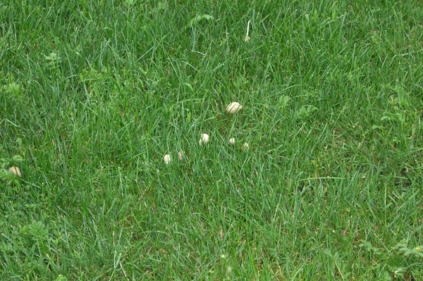 В траве у дома моего. Газон возле посольства Нидерландов