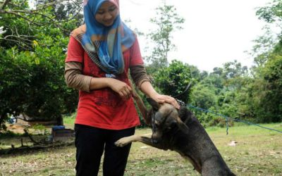 Ostracised, yet young animal lover risks all to rescue animals