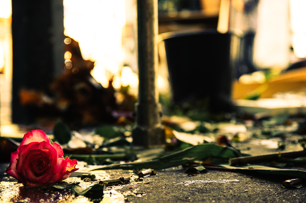 photographie rose abandonnee