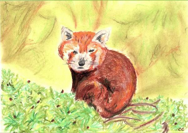 Céline-Petit---Céline Caillau panda-roux---pastels---A4
