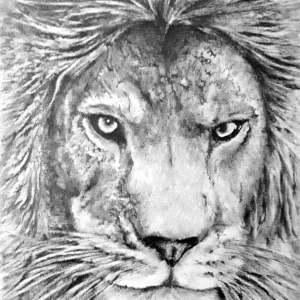 Chrispicture Stud'Art – Lion