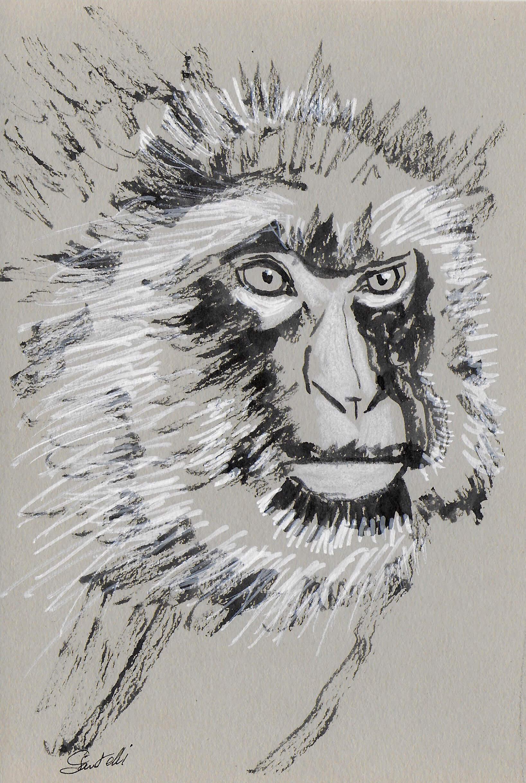 Claudine Santelli-macaque de barbarie