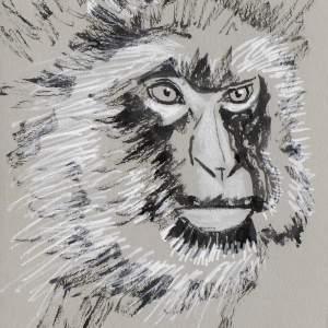 Claudine Santelli – Macaque de Barbarie